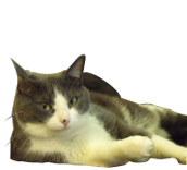 Soapy - The Boss
